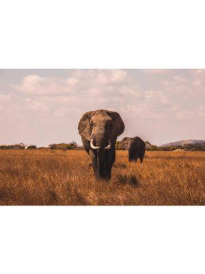 La marche de l'éléphant
