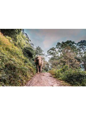 Le chemin de l'éléphant